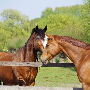 coachen-paarden-karoline-visser-weiland